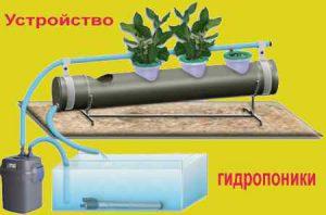 Гидропоника своими руками для выращивания огурцов и зелени