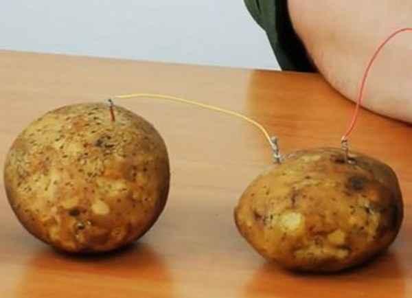 Бесплатное электричество из картошки в домашних условиях